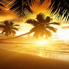 Jamaica Sunshine