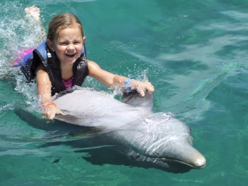 Swim With Dolphins Jamaica