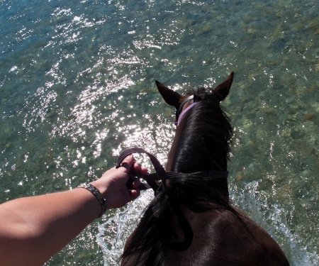 Swimming With Horses Jamaica